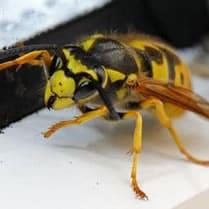 Boutique guepes-frelons-abeilles